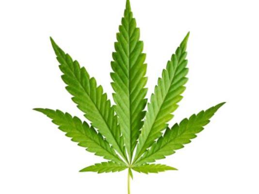 What is marijuana? The cannabis plant originates from Asia. A variety of products can be produced from the flower of the cannabis plant, including: o dried herbal material (i.e., marijuana ); o oil (e.