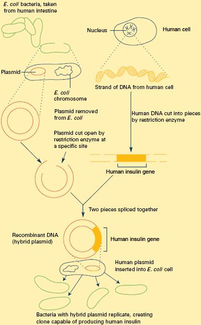 Genes that encode for the production and secretion of human