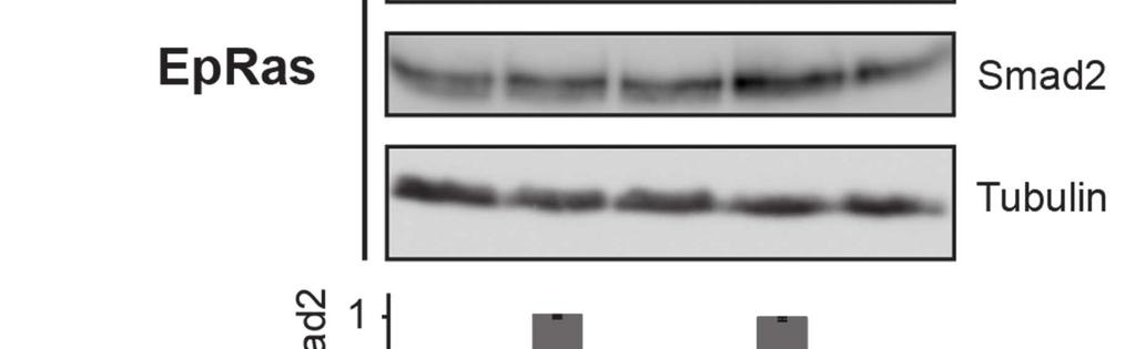 (e). Medium was also taken from cells after 8 h of ligand exposure and used to