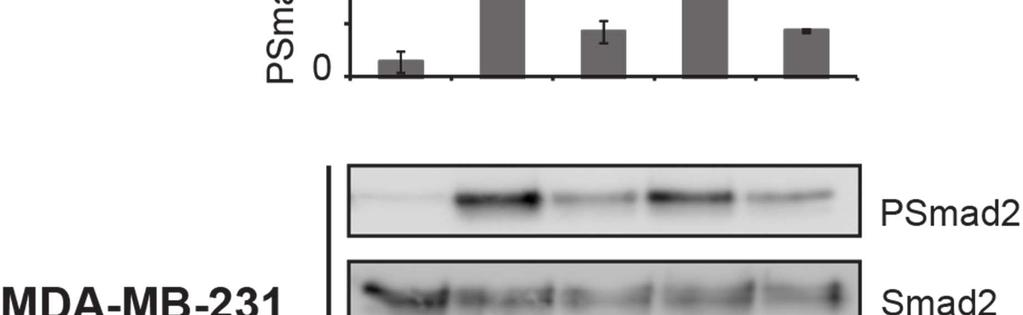 Lysates were assayed by Western blot using antibodies recognizing PSmad2 and Smad2,