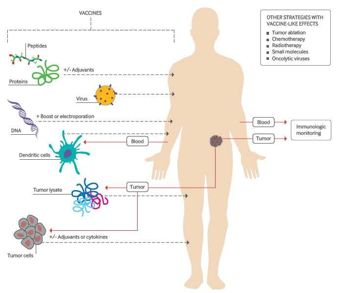 Types of cancer vaccines 1) Peptidebased, MHC I restricted epitopes on TAAs 2) DNA, RNA based 3) AutologousAPCsin TAA