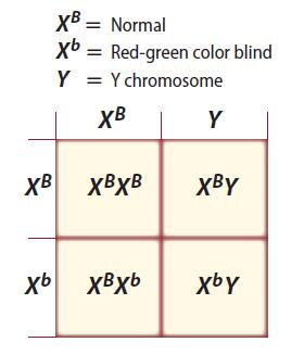 Sex-Linked Traits Red-green color blindness Recessive,
