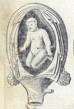 Illustrations Wolveridge was not the only author to copy illustrations at that time. In the images shown in Figure 4.