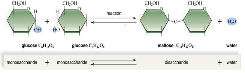 Synthesis of a