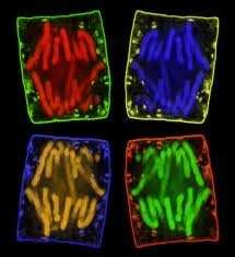 The frequency of cell division varies with the type of cell.