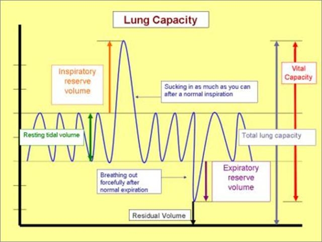 Lung Capacity vital capacity: the total volume of gas that can be moved into and out of the lungs Vital capacity = tidal volume+ inspiratory reserve + expiratory reserve residual volume: the amount