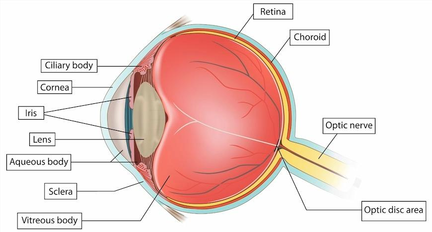 Keep an Eye on Your Diet to Improve Your Eye Health While we may eventually need glasses as we age, it is not a guarantee.
