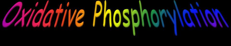 43 xidative Phosphorylation As electrons move along the electron transport chain, about 52.