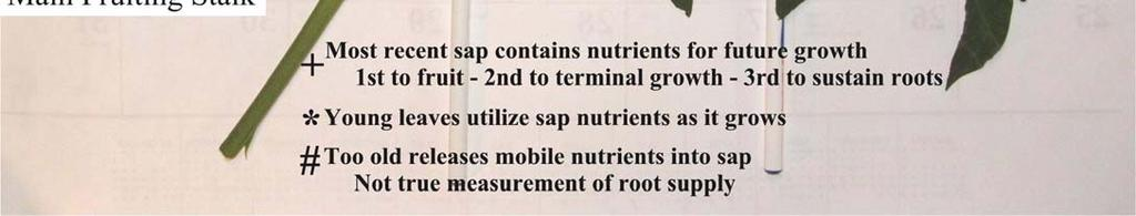 Growers who will monitor, adjust and fine-tune plant nutrition are at an advantage in terms of economy,