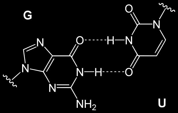 Refresher: DNA base pairs G:U base pair has two misaligned hydrogen