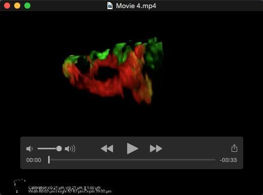 Movie 4. Macrophages make intricate F-actin structures to surround and constrict portions of agldl.