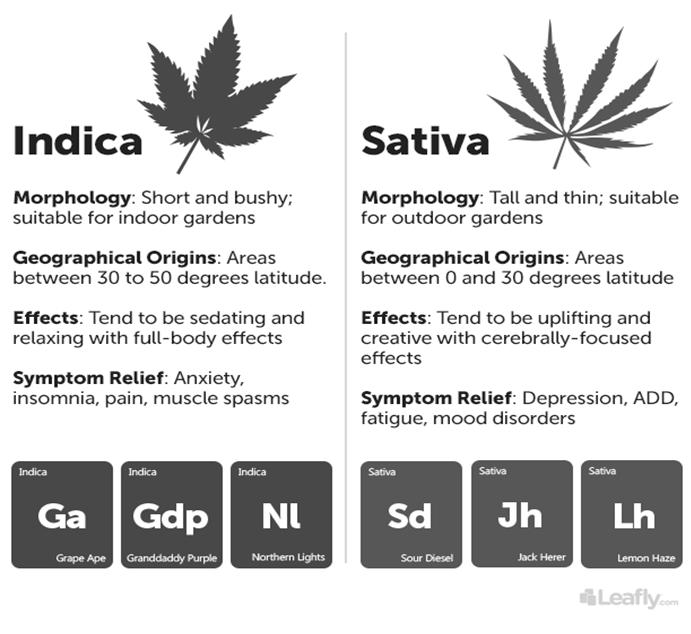 Varieties/Strains Though cannabis is biologically classified as the single species Cannabis Sativa, there are at least 3 distinct plant varieties: Cannabis Sativa Cannabis Indica Cannabis Ruderalis