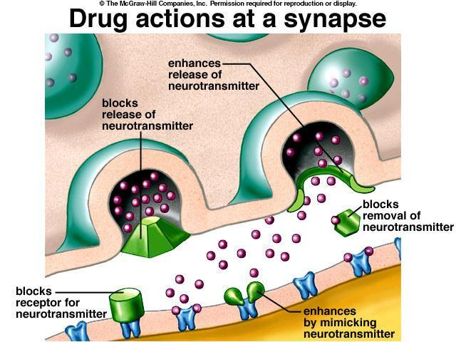 Many drugs have their effect at the synapse. The effect they have depends on whether it is an excitatory or inhibitory synapse, and on the drug itself.