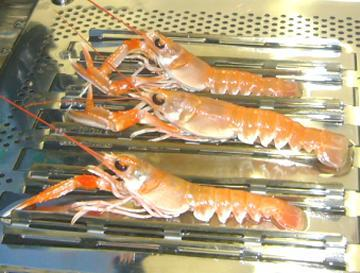 Results The Crustastun process The Crustastun process (110 volt, 2-5 amp delivered for 5s lobster symbol) was found to reliably kill all the animals (up to 5) placed in the chamber, as judged by the