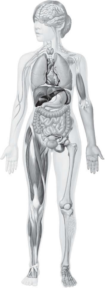 46 Anatomy & Physiology Coloring Workbook BODY TISSUES 17. The four major tissue types are named in Figure 3 9.