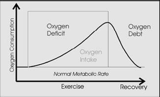 Oxygen Deficit While exercising intensely the body is sometimes unable to meet all of its energy needs.