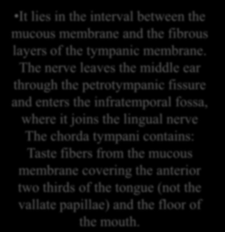 layers of the tympanic membrane.