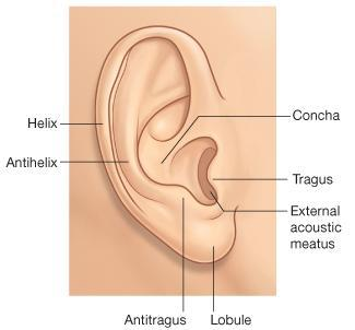 A-AURICLE It consists of: