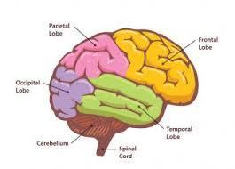 Dementia disorders - differences Basal parts of the brain (Basic