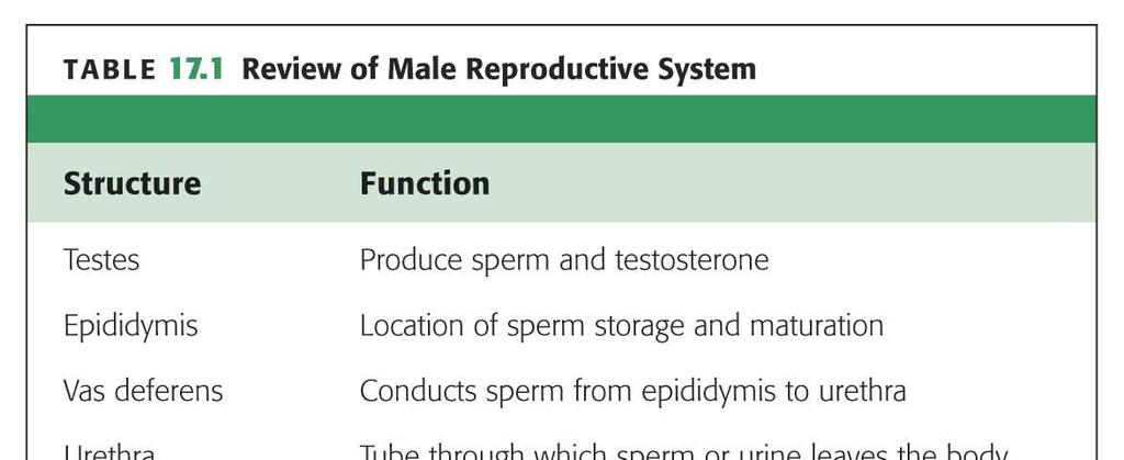 Outline Terminology Human Reproduction Biol 105 Lecture Packet 21 Chapter 17 I. Male Reproduction A. Reproductive organs B. Sperm development II. Female Reproduction A. Reproductive organs B. Egg development C.