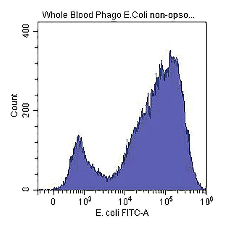 coli bacteria in whole blood