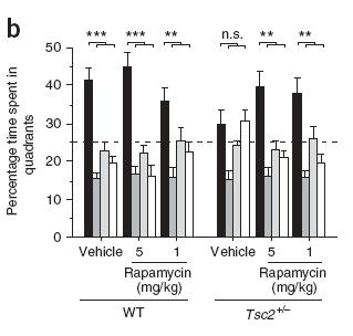 TSC2 +/- mice Learning Deficits Rapamycin IP for 5 days Learning