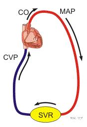 Mean arteriole pressure Pressure driving blood into the tissues