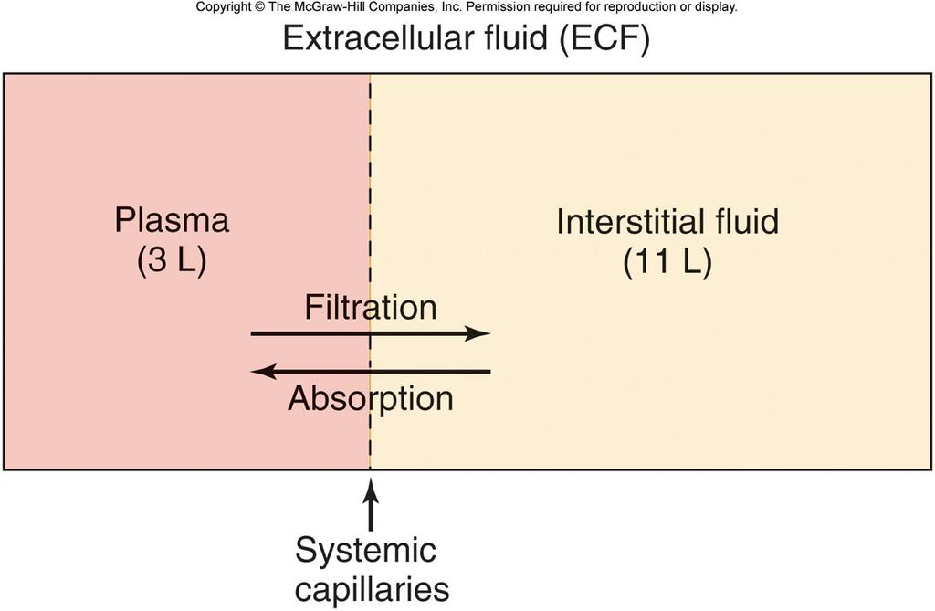 Bulk Flow Movement of Protein-Free Fluid Distribution of ECF Bulk flow of proteinfree plasma Remember the
