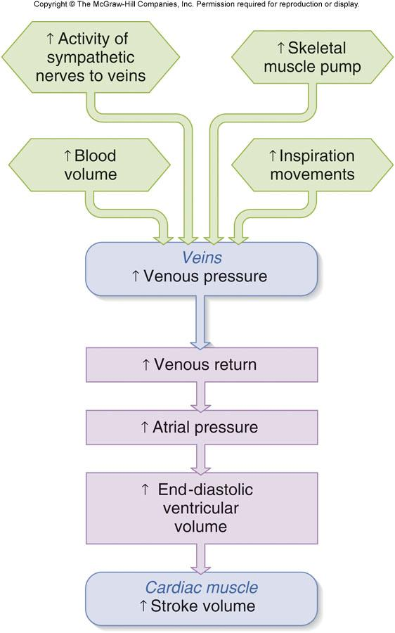 Venous Pressure and SV 1.