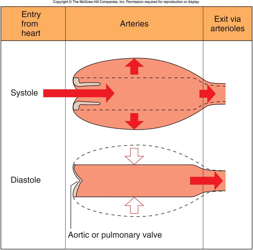 Arterial Blood Pressure 1/3 of the stroke volume leaves the arteries during systole The rest of the volume remains in the arteries during systole