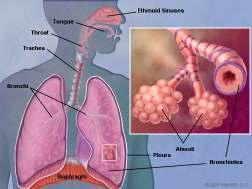 Lungs - The functions of the TCM Lungs The Lungs govern Qi and respiration. They also are closely related to the skin, therefore they are the organ that connects the human to the environment.