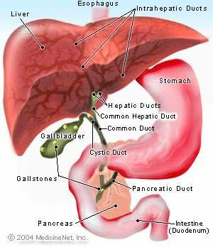 Gallbladder - The functions of the TCM Gallbladder The Gallbladder is the only Yang organ which does not deal directly with food and drink. It is also considered an extraordinary organ.