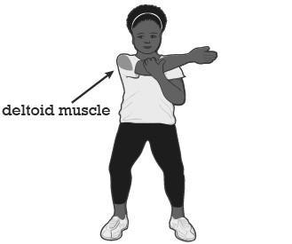 Stretches Exercise Tool 1) Chest Stretch (Pectoral Muscle) Ø Stand with your feet shoulder width apart Ø Relax your shoulders and make sure they are not hunched up Ø Clasp your hands behind your back