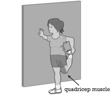 3) Thigh Stretch (Quadricep Muscle) Ø Ø Using a wall for support, stand sideways to the wall Take hold of your ankle, foot, sock, or pant leg as you bend your leg back from the knee (see figure) Ø