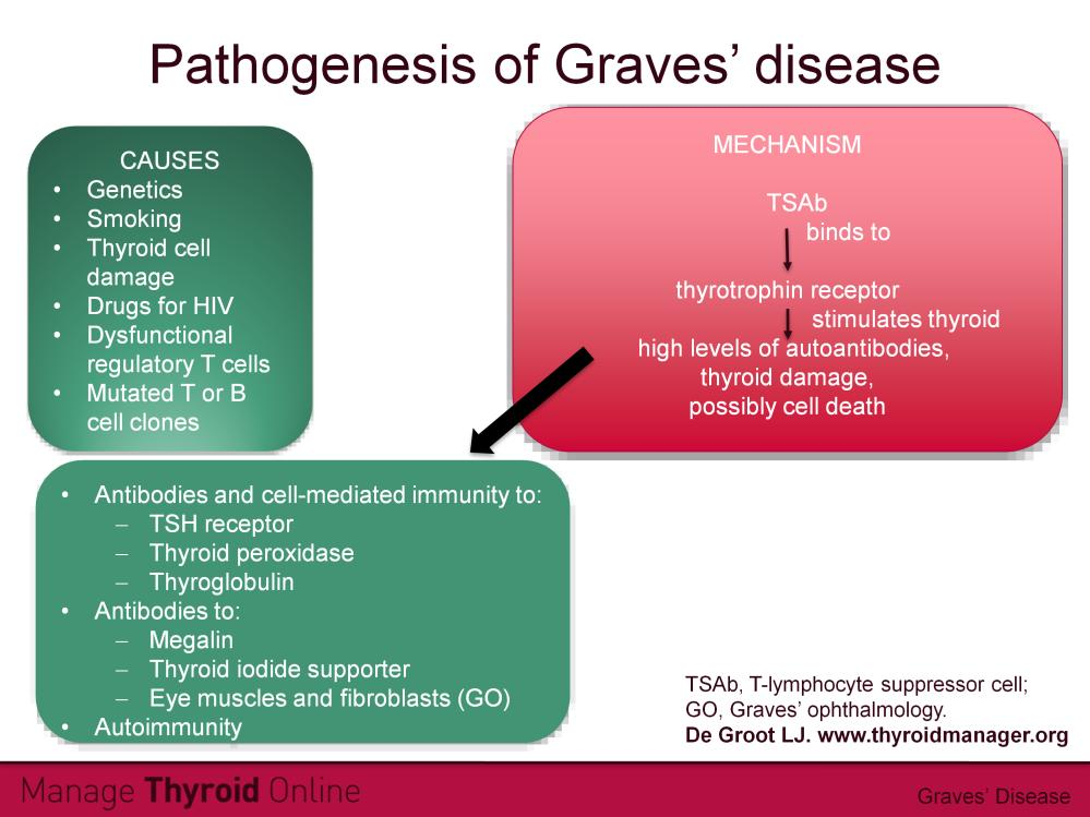 There are a number of factors thought to be involved in the pathogenesis of Graves disease. Hereditary factors play a role, especially the inheritance of antigens DR3, DQ2 and DQA1*0501.