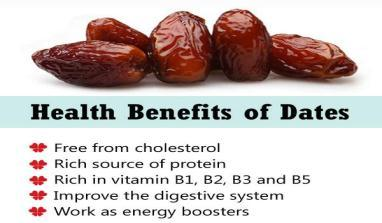 balanced & nutritious diet for both mind & body. Dates & date palms have been mentioned in the Holy Quran nearly 20 times, thus showing their importance.