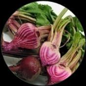 - :(اىعيق) (Salq) Lesson no. 42 Beet Root BEETS GET TO KNOW ME Baby Candy Cane Beet.