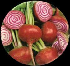 The juice from the bull s blood beet is used to make the food red coloured. It is available year-round.