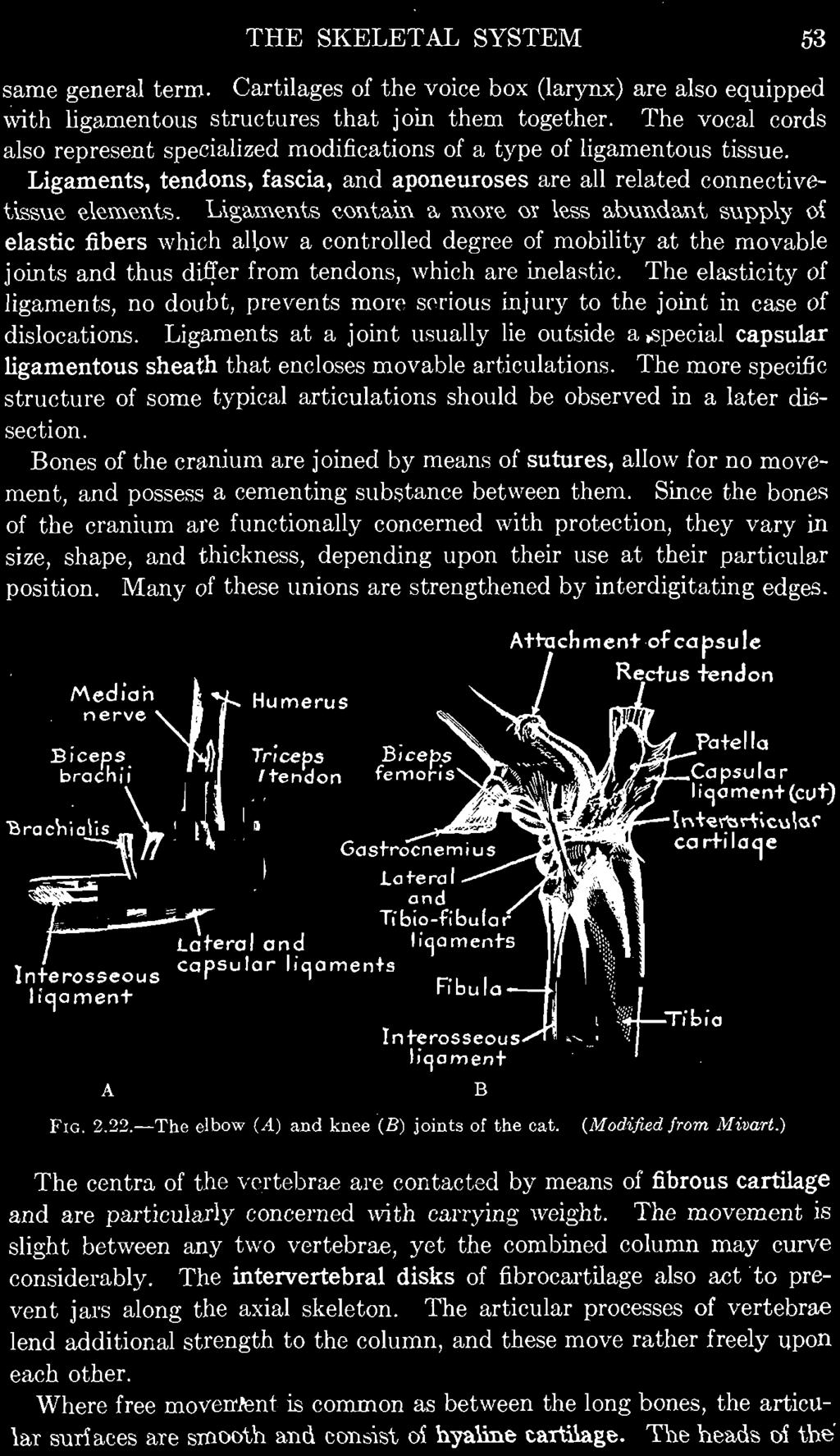 Ligaments ~onta,in a, mme or les'i:\ a,bunda,nt 'i:\upply 01 elastic fibers which auow a controlled degree of mobility at the movable joints and thus differ from tendons, which are inelastic.