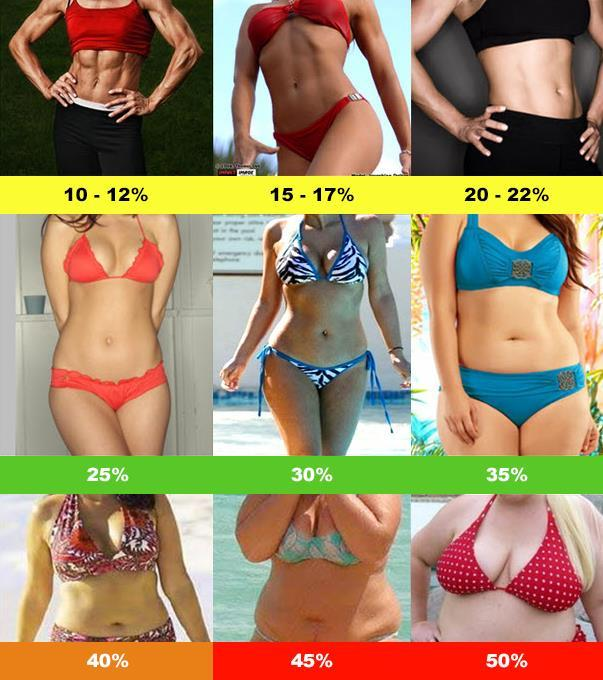 Female Body Fat % Female Body Fat % Optimum Low Normal