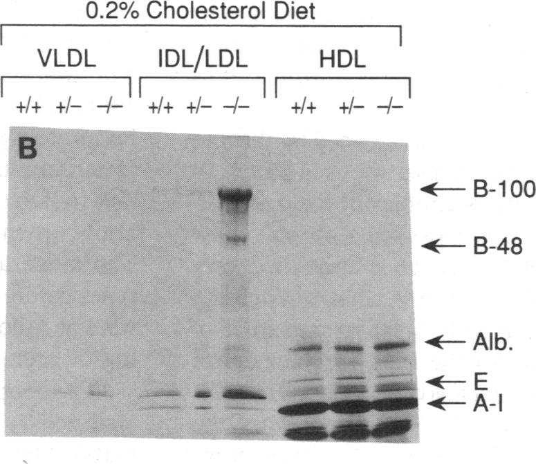 2% cholesterol and.~ - _ *I AOb.10% coconut oil () as de- ~~~~~~~~~~~.scribed E in the legend to Fig. E A- A-A-I 4. The apoproteins from the VLDL, IDL/LDL, and HDL containing fractions in Fig.