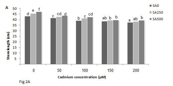 Effects of SA and Cd on stem and root length in sunflower (A: stem length,b: root length