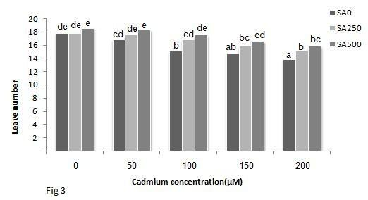 85 Effect of salicylic acid treatment... Figure 3. Effects of Cd and SA on leaf number in sunflower, data are means of four replicates.