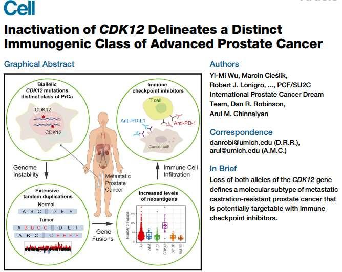 Climbing up CDK12 inactivation CDK12 biallelic inactivating mutations define a distinct subtype of prostate cancer CDK12 loss is associated with genomic instability and focal tandem