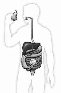 entrance Sugar entrance closed Normally, your pancreas senses the amount of sugar in your blood. It releases the right amount of insulin so that all of the cell doors open for sugar to enter.