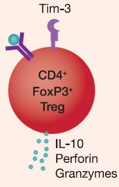 suppressive activity TIM-3 is expressed on tumor associated dendritic cells and may