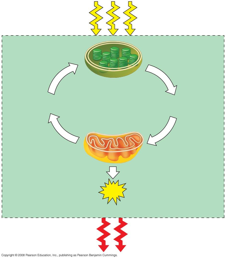 Fig. 9-2 Light energy ECOSYSTEM CO 2 + H 2 O Photosynthesis in chloroplasts Cellular