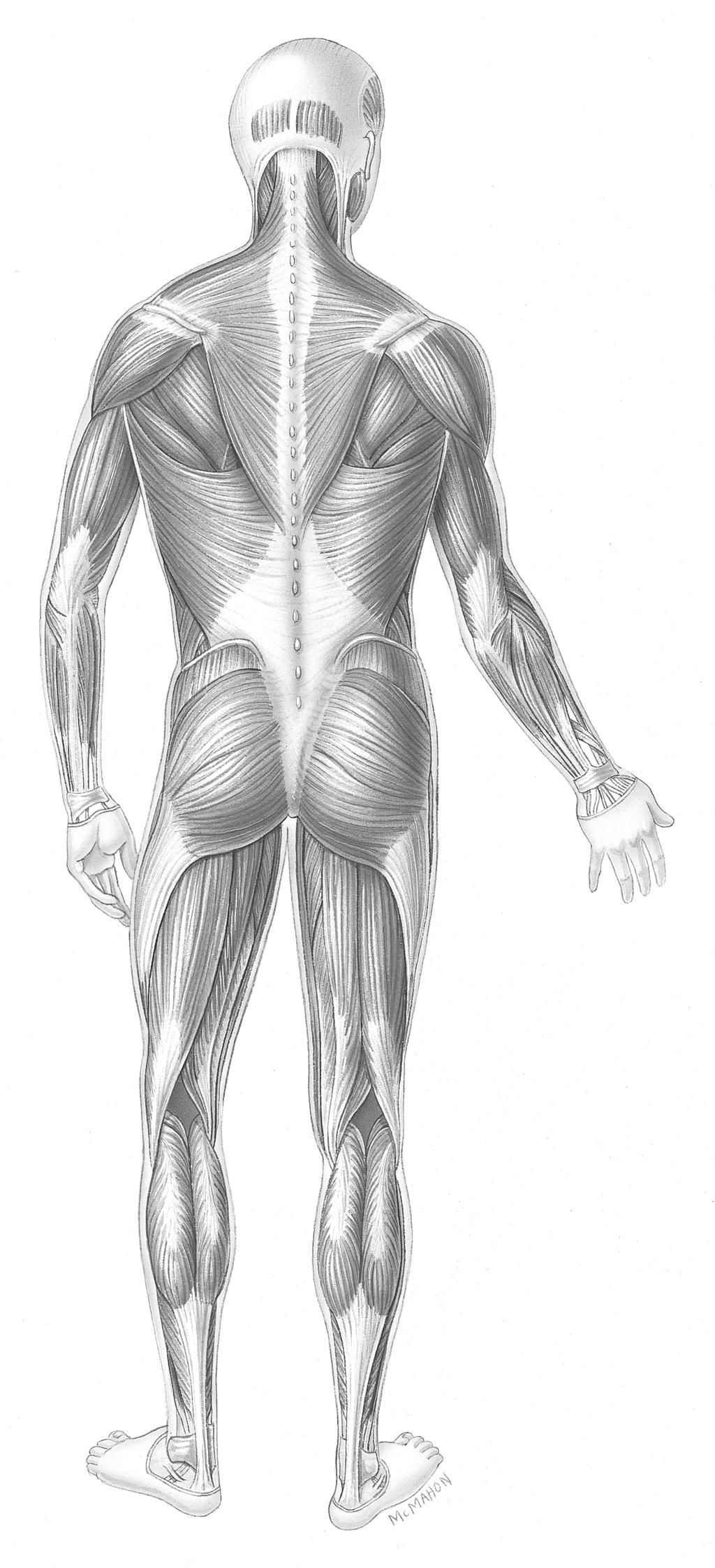 The Muscular System OBJECTIVES ACTIVITIES. A. Completion - PDF