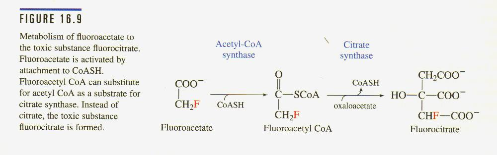 Catalyzes a lyase reaction that results in rearrangement of citrate with a tertiary alcohol to isocitrate with a secondary alcohol -