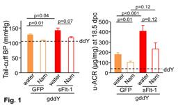 Nicotinamide Ameliorates IgA Nephropathy and Pregnancy Outcome in Pregnant Groupedddy Mice PrimaryAuthor.